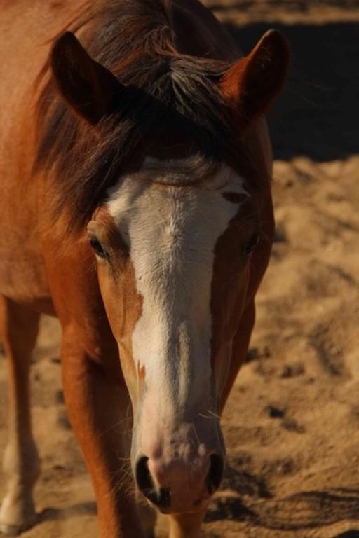pferd oder pony