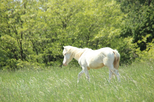 Albino & Albinismus