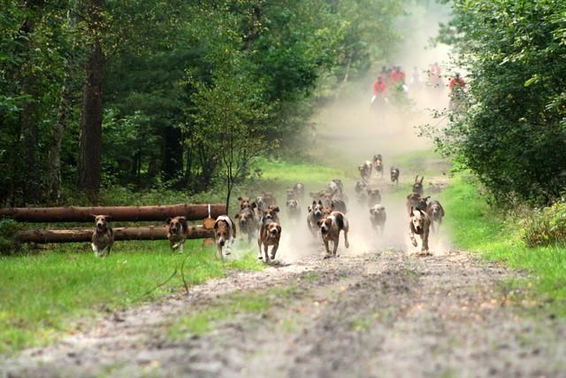 Jagdreiten